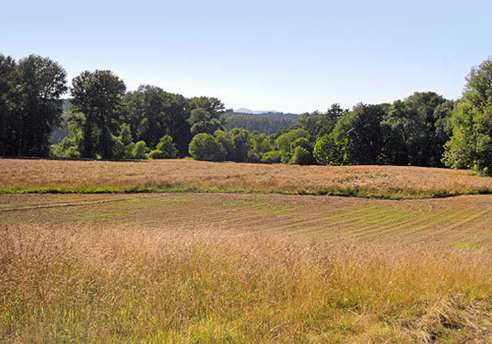 Willamette valley pasture (bird habitat)